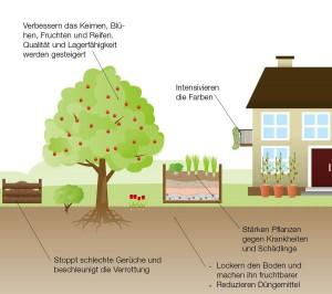 Plakat_EM_Illu_Pflanzenwelt