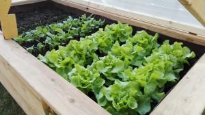 Salat 12.4.16