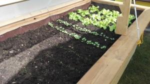 Salat 2.4.16
